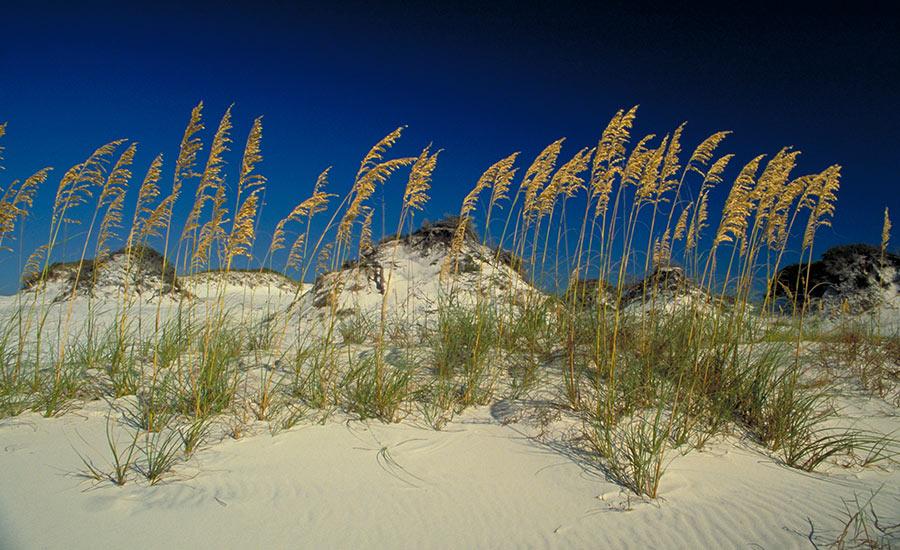 leslie-mckenna-coastal-retreats-sea-oats